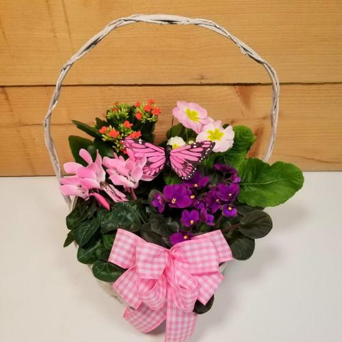 Saville's Four Plant Basket (SCF20D39)