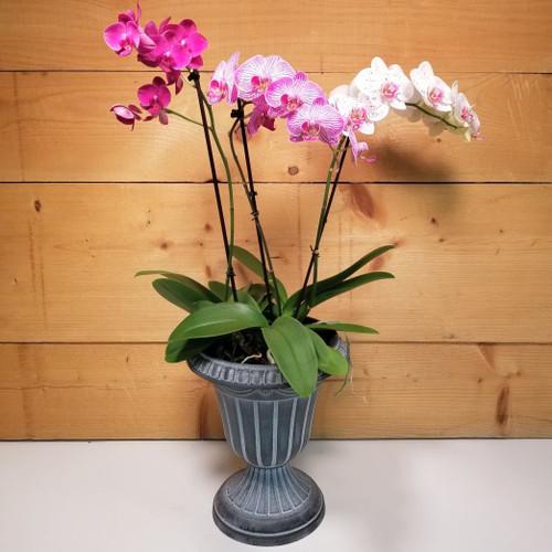 Premium Orchid Pedestal (SCF21D40)