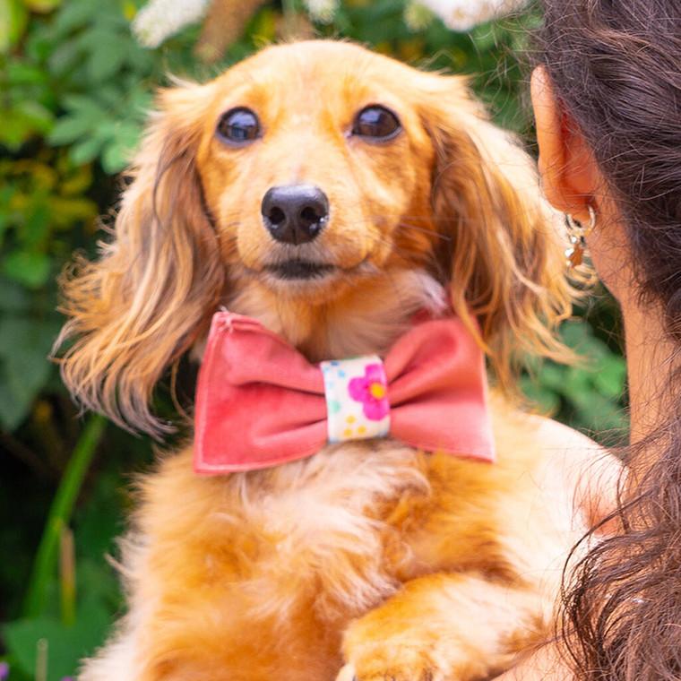 Handmade Dog Bow Tie