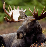 Laura Feathers is a Winner in the Vermont Moose Lottery and Experiences the Hunt of a Lifetime!