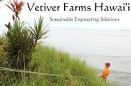 Vetiver Farms Hawaii