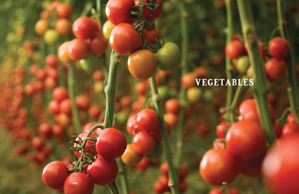 Vegetable Gardener's Handbook - eBook