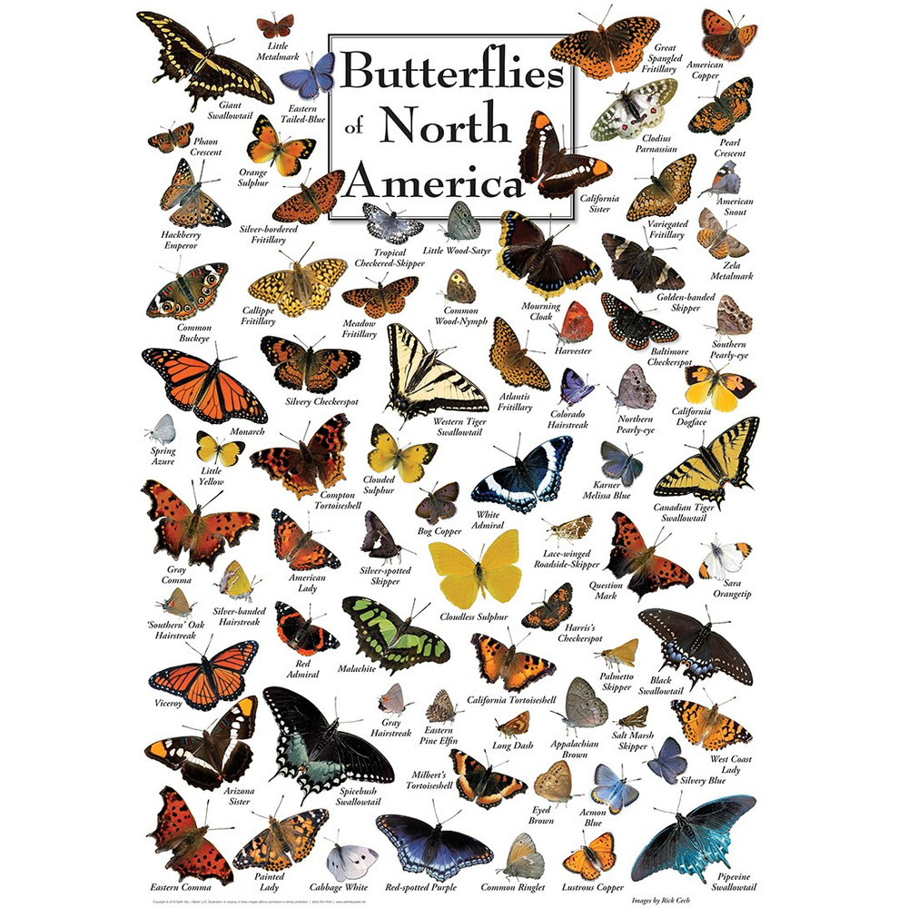 Field Guide - Butterflies of North America 1000pc Puzzle