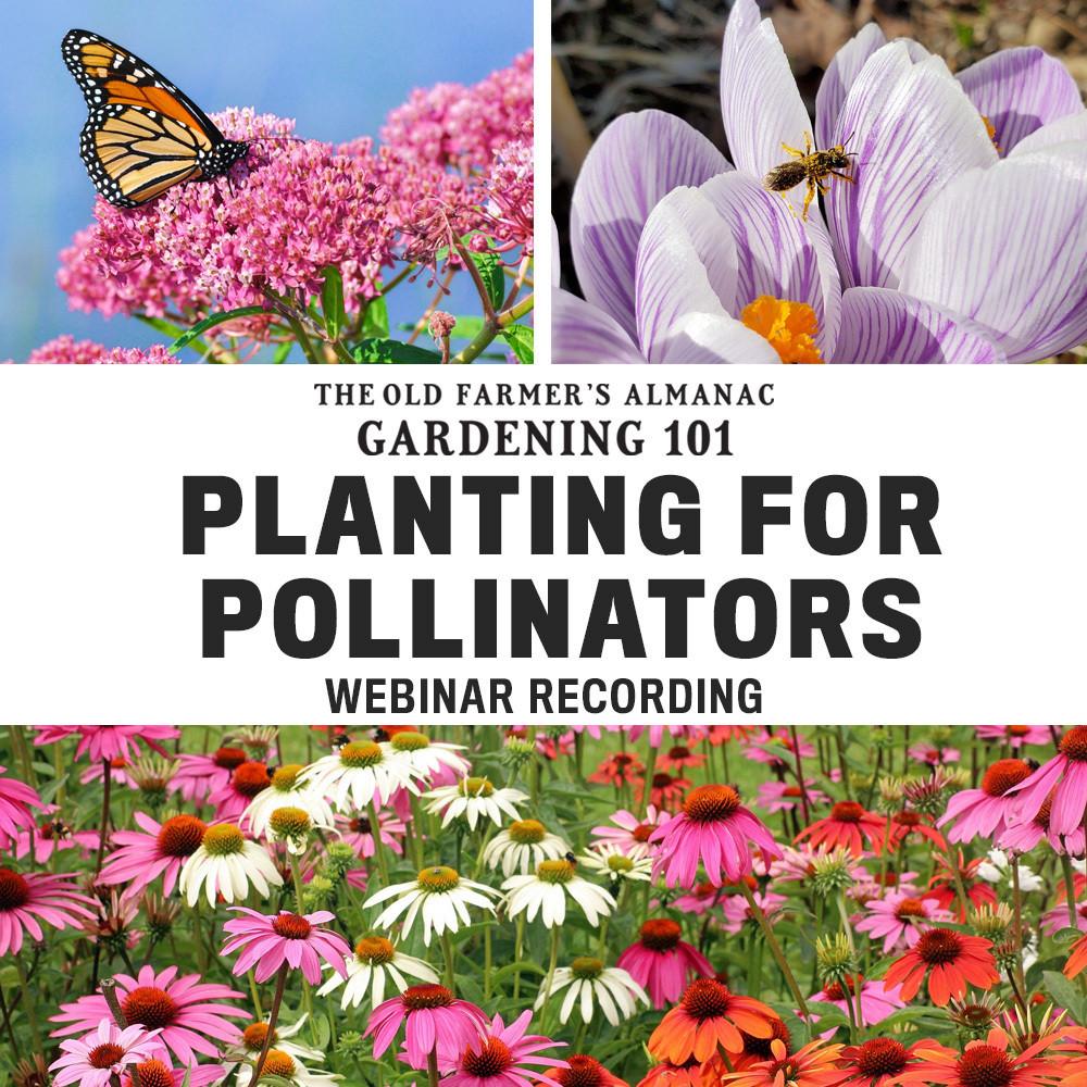Planting for Pollinators Webinar Recording