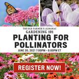 Planting for Pollinators Live Webinar