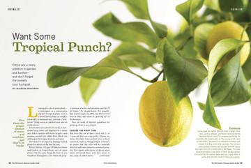Garden Guide Citrus