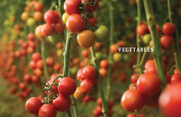 Vegetable Gardener's Handbook by The Old Farmer's Almanac