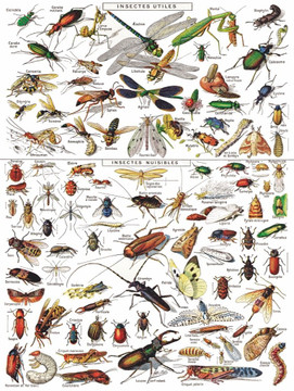 Insects ~ Insectes Jigsaw Puzzle 1000 Piece