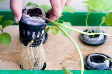 Hydroponics Gardening 101 Webinar  Recording