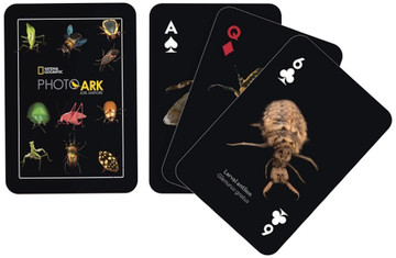 Insects Playing Cards