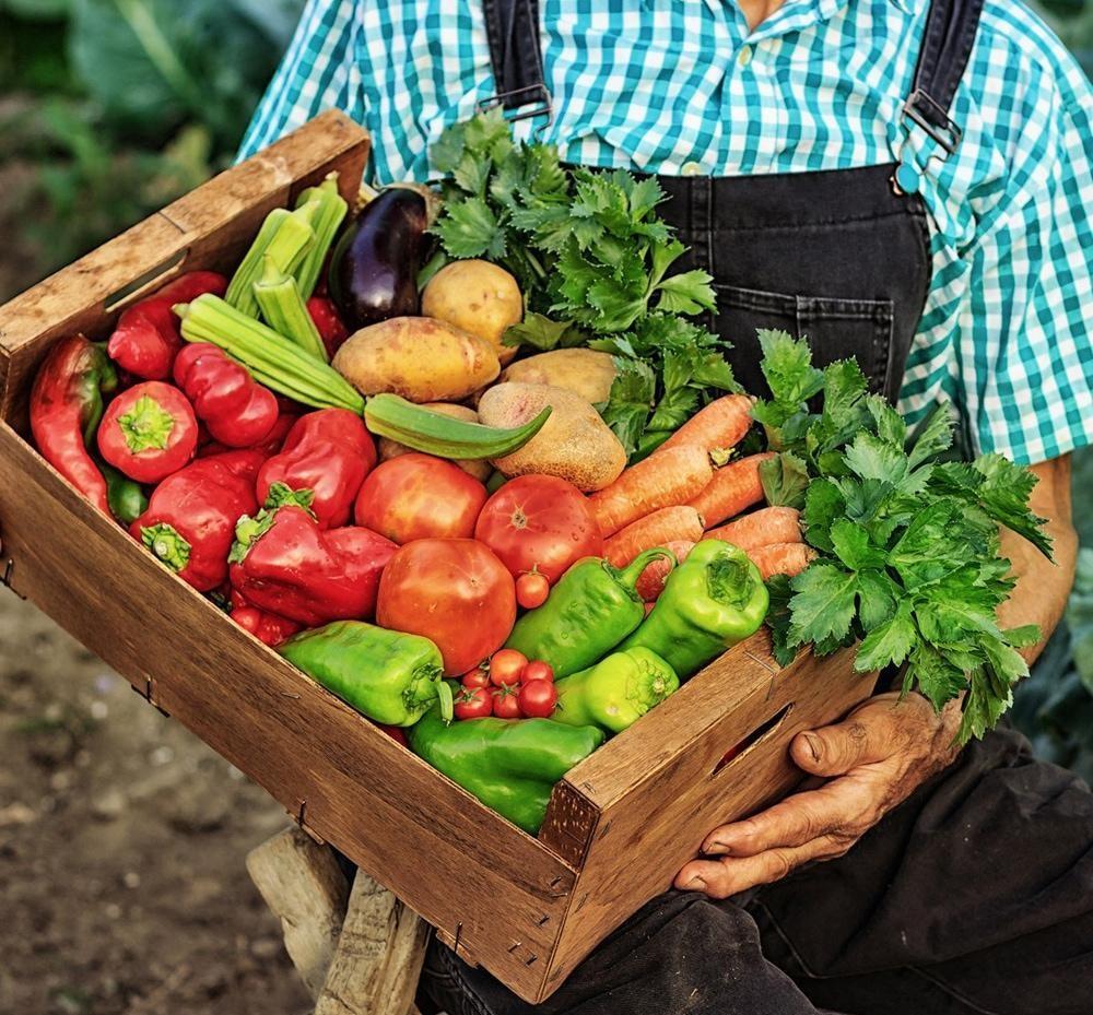 old-farmer-harvest.jpg