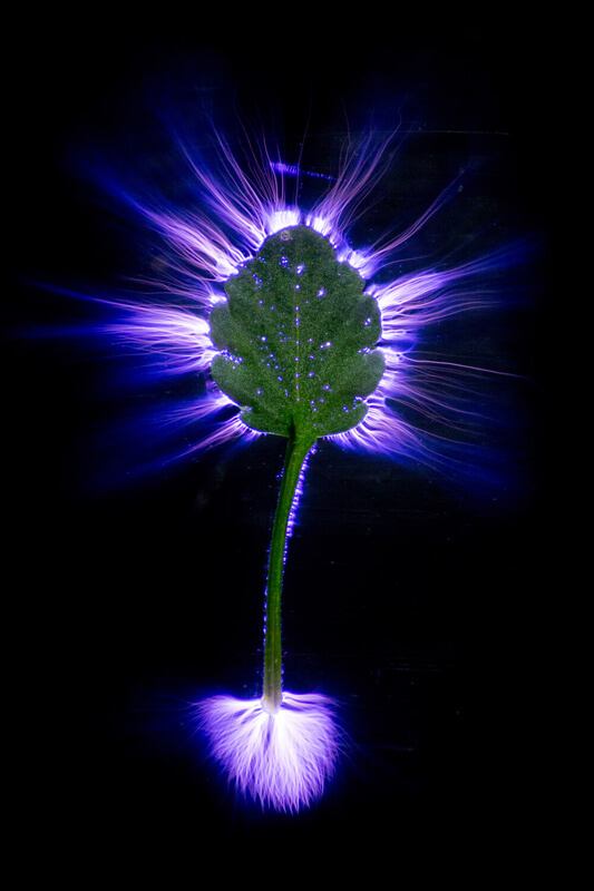 ethno-intrinsic-botanicals-3.jpg