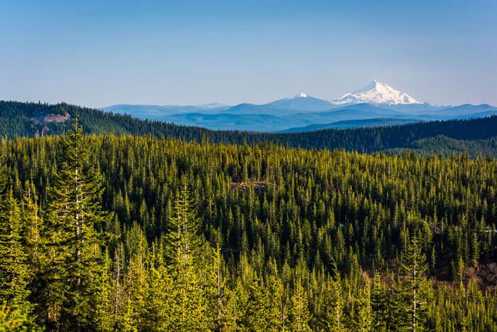 forest-stewardship-council.jpg