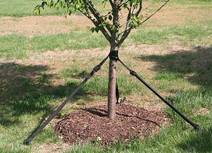 tree-strap2.jpg
