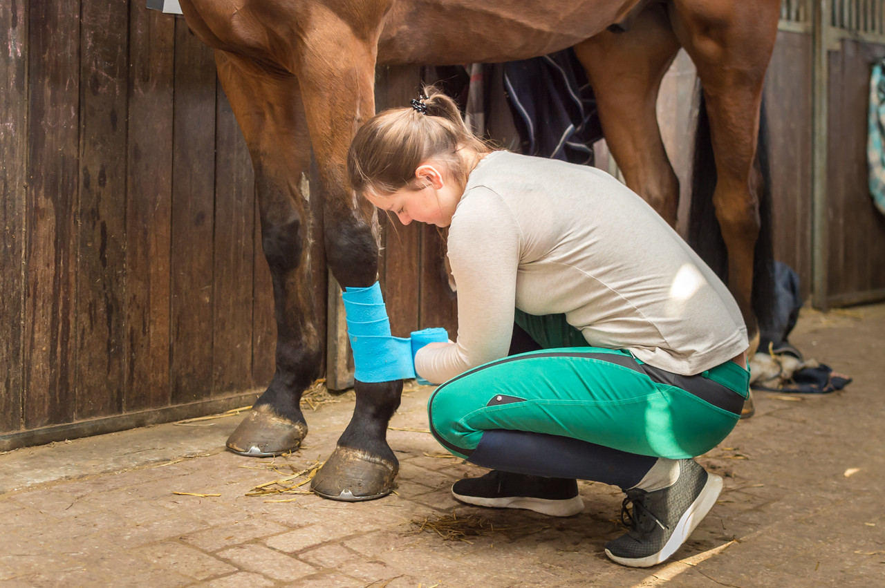 Why You Need an Equine First Aid Kit and How to Assemble One