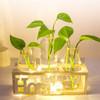 Glass Bottle Shelf With LED