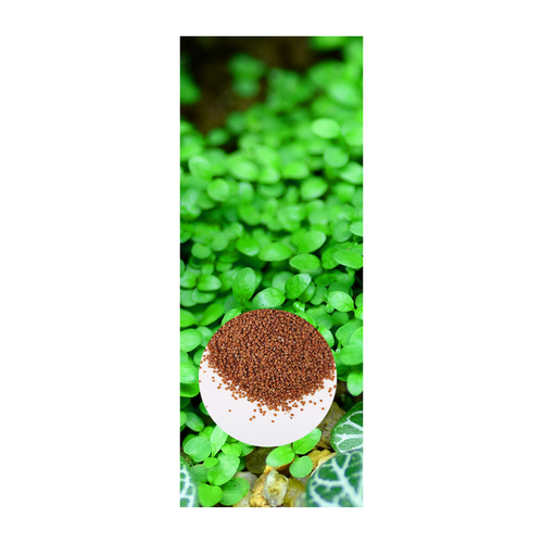 Aquarium Mini Leaf Grass Seed 10g