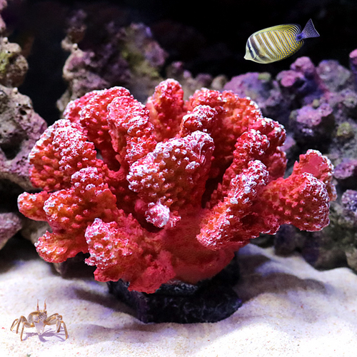 Artificial Red Coral