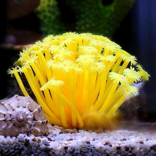 Artificial Sea Urchin Yellow