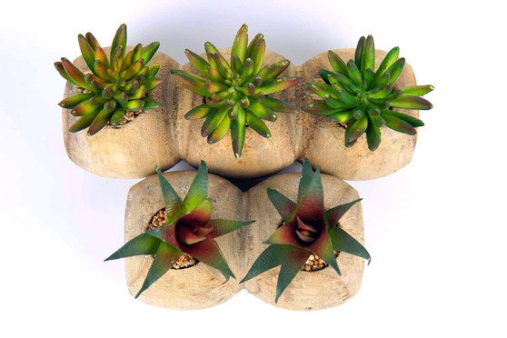 5 Pieces Artificial Succulents Set with Wood Pot by Direct Wicker