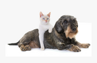 A Deep Dive on How CBD Works for Your Pet