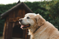What Makes CBD Great For My Pet?