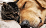 Can Your Pet's Seizures be Treated with Hemp Oil?