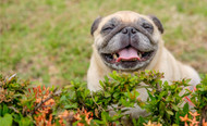 Thick Fur, Clear Eyes: Using CBD is Not the Same as Getting Your Pet High