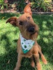 Tweed Doggy Neckerchief Bandana - Shamrock