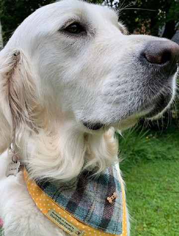 Tweed Doggy Neckerchief Bandana -Yellow & Green Plaid