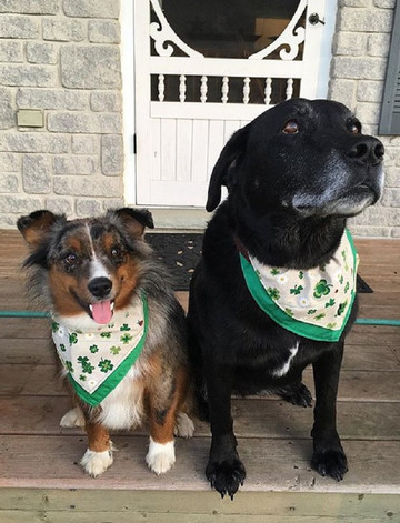 Tweed Doggy Neckerchief Bandana - Shamrock