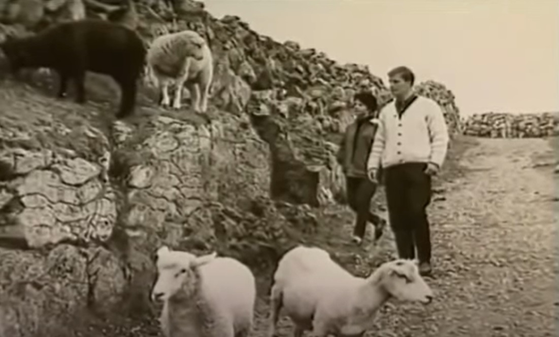 couple-sheep-road.jpg