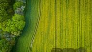 How Hemp Can Heal Our Planet. Can Hemp Improve the World?