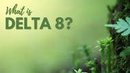 What Is Delta 8 THC? Everything You Need to Know
