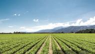 What The US Farm Bill Means For CBD | SourceCBDOil.com