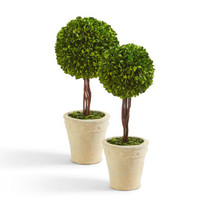 Astor Boxwood Topiary, Large