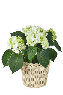 Amanda Lindroth Large Orchid Basket Set