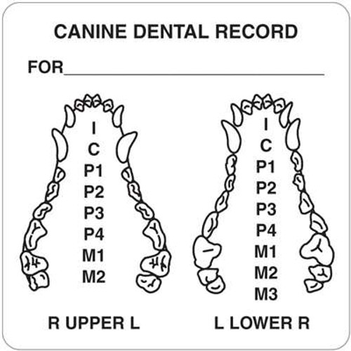 """Canine Dental Record 2-1/2"""" x 2-1/2"""" White"""