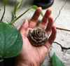 Flower Incense Holder | Small Clay Rose | H20201371