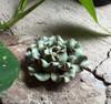 Flower Incense Holder   Small Celadon Peony   H20201373