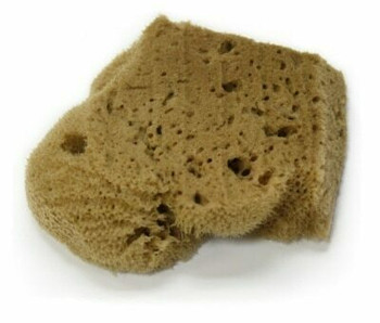 Small Elephant Ear Sponge
