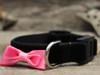 Bowtie Pink cat collar by Diva-Dog.com