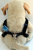Carnation blue velvet step-in Harness - by Diva-Dog.com  - Rear View