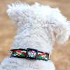 Wild One Black dog collar by diva-dog.com