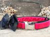 Marilyn pink velvet dog collar by www.diva-dog.com