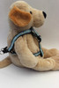 Daisy Step-In Harness - by Diva-Dog.com  - Side View