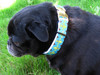 Camelot dog collar - by Diva-Dog.com