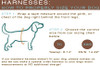 How to properly fit your dog for a step in harness by www.diva-dog.com