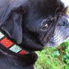 Savannah Squares Linden and Rust dog Collar - by Diva-Dog.com