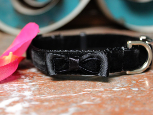 Bowtie black velvet dog Collar - by Diva-Dog.com
